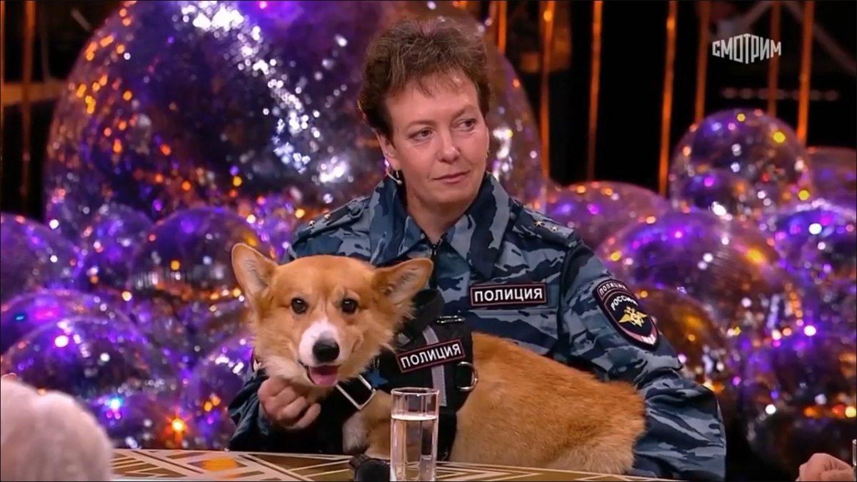 «Нет профессии более романтичной»: нижегородский корги-полицейский поздравил коллег с профессиональным праздником