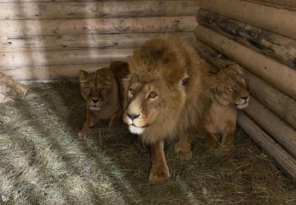 Последних обитателей «Мишутки» перевезли в балахнинский зоопарк