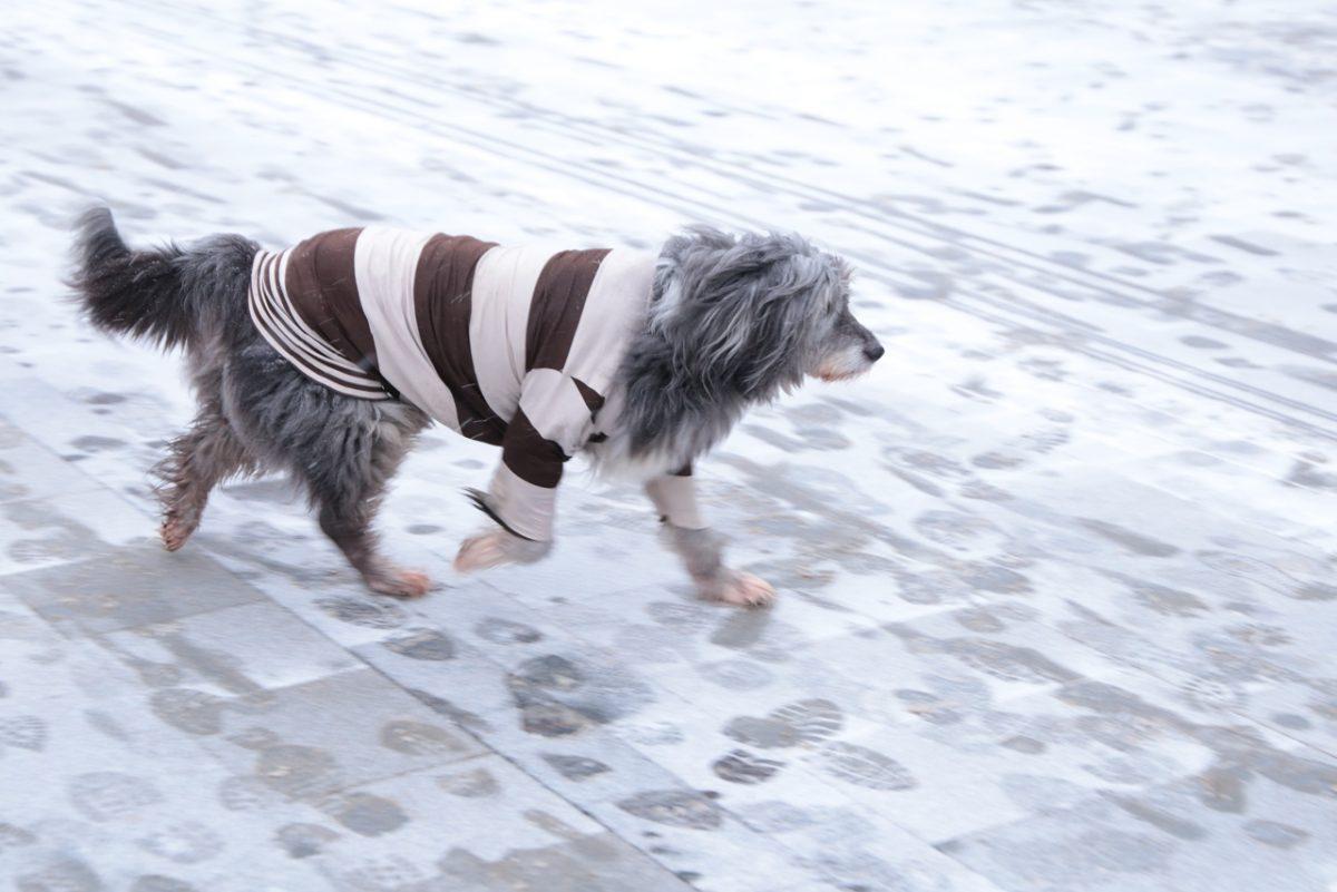 Средства на новые площадки для выгула собак и бесплатную стерилизацию домашних животных найдут в бюджете Нижнего Новгорода