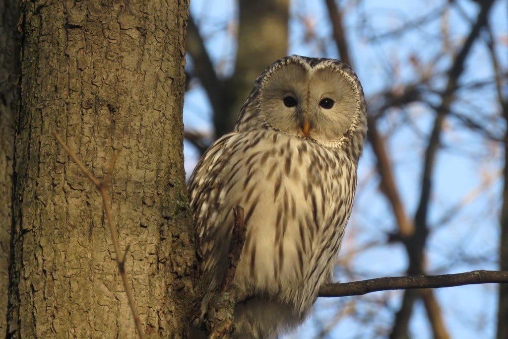 Фото дня: Редкую сову нижегородцы обнаружили на Щелоковском хуторе