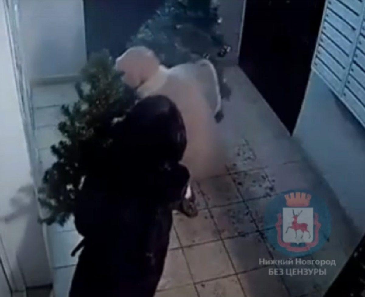 Операция «Новый год»: нижегородки вернули украденную из подъезда ёлку