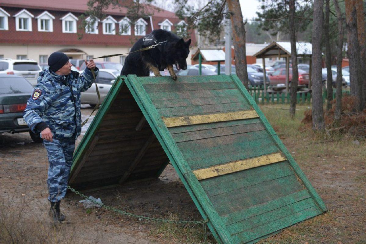 Две площадки для выгула и дрессировки собак построят в Нижнем Новгороде в 2021 году