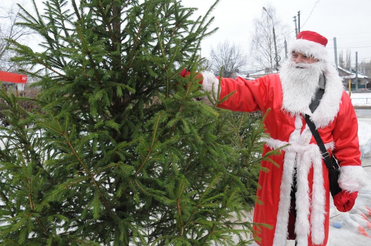 Сезон заготовки новогодних елей стартовал в нижегородских лесничествах