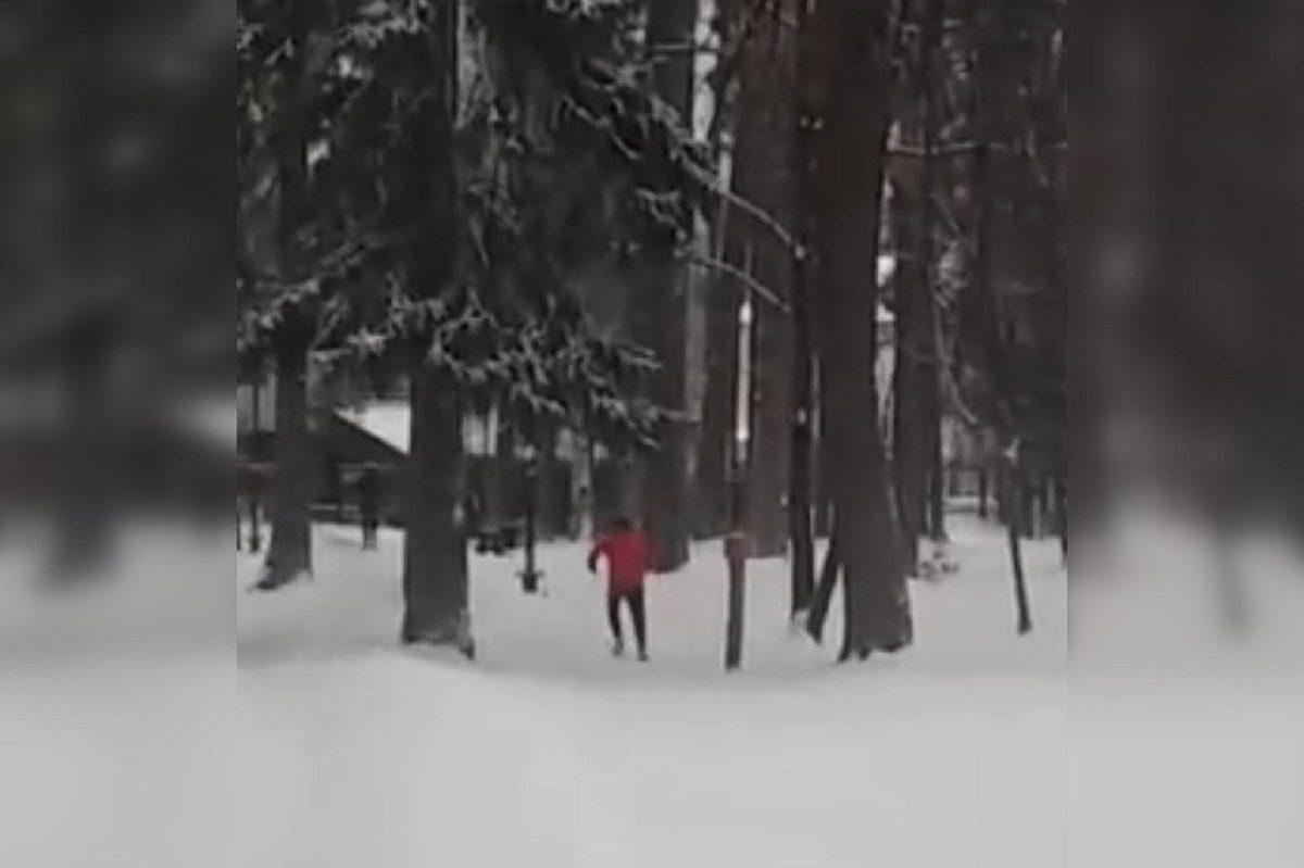 Подростки взорвали петарды в беличьих кормушках в Выксунском парке