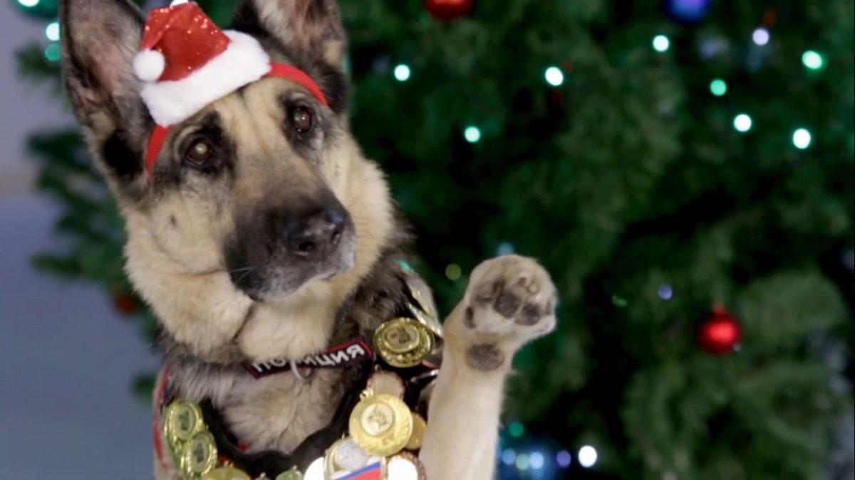 Видео дня: служебные собаки заменили Деда Мороза и Снегурочку на новогодней открытке от МВД России