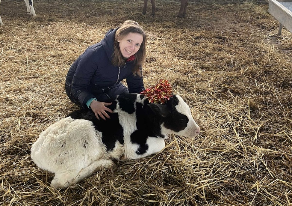 Нижегородские заводчики быков рассказали об особенностях характера символа будущего года
