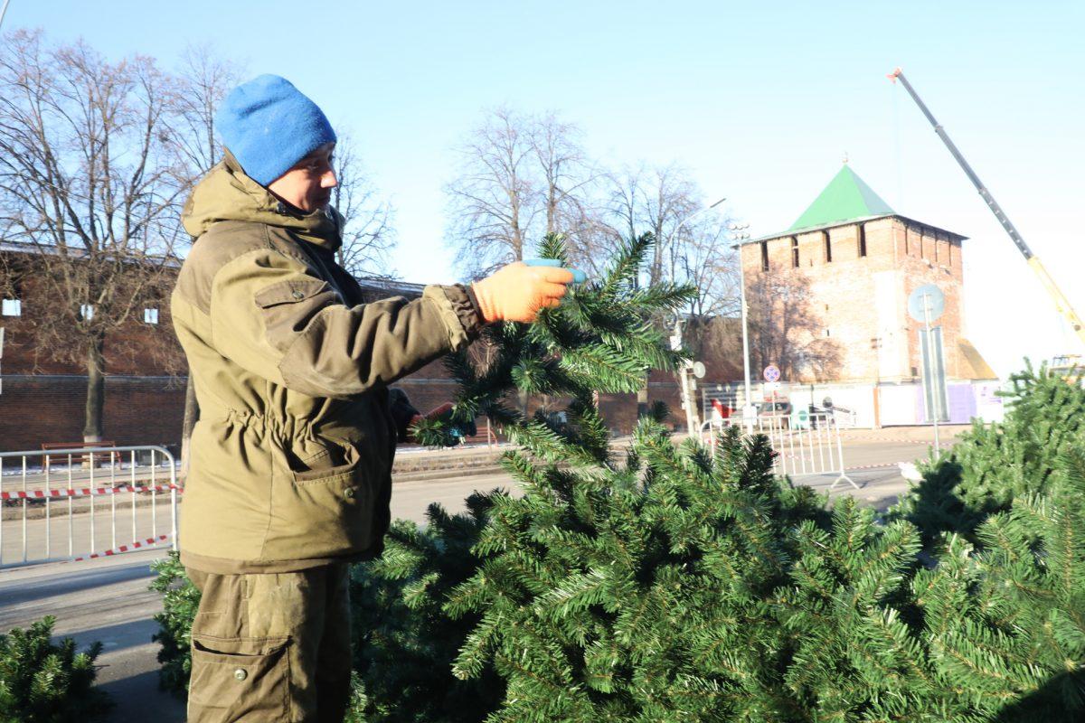 Главную ёлку города устанавливают на площади Минина и Пожарского