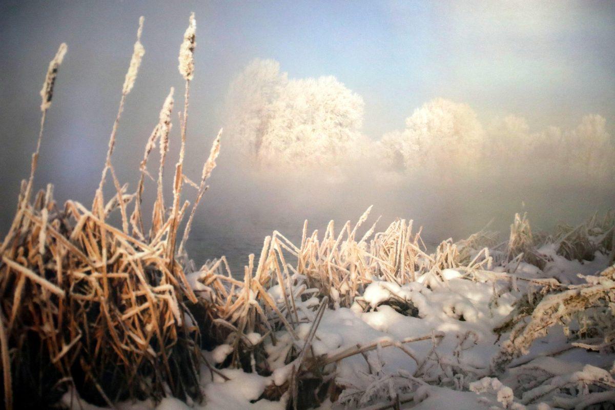 «Артемовские луга – жемчужина Нижегородского Поволжья»: в региональном парламенте обсудили сохранение уникального природного объекта