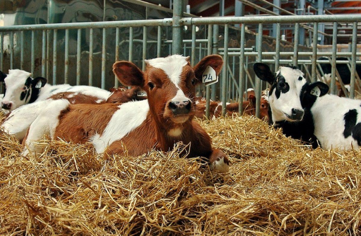Около 200 новых фермерских хозяйств создано вНижегородской области в2020 году