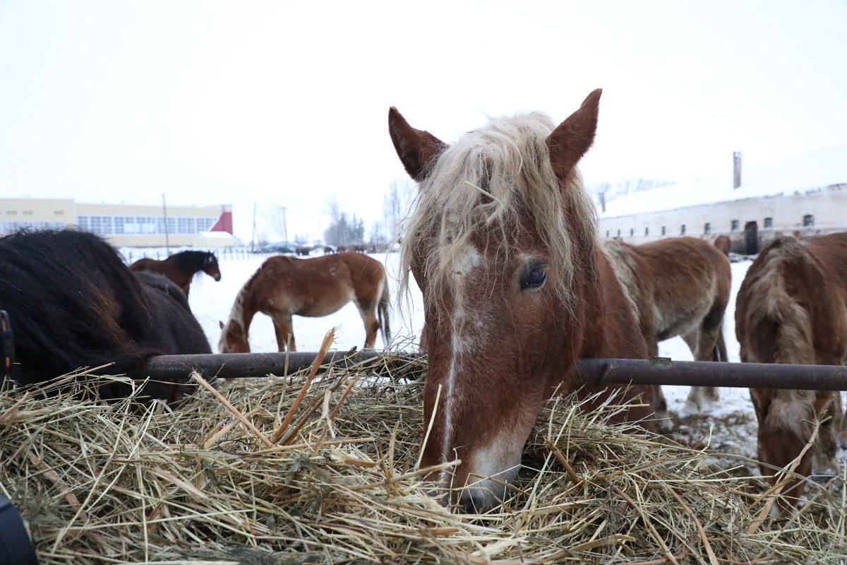 Правительство региона поможет ввосстановлении Починковского конного завода