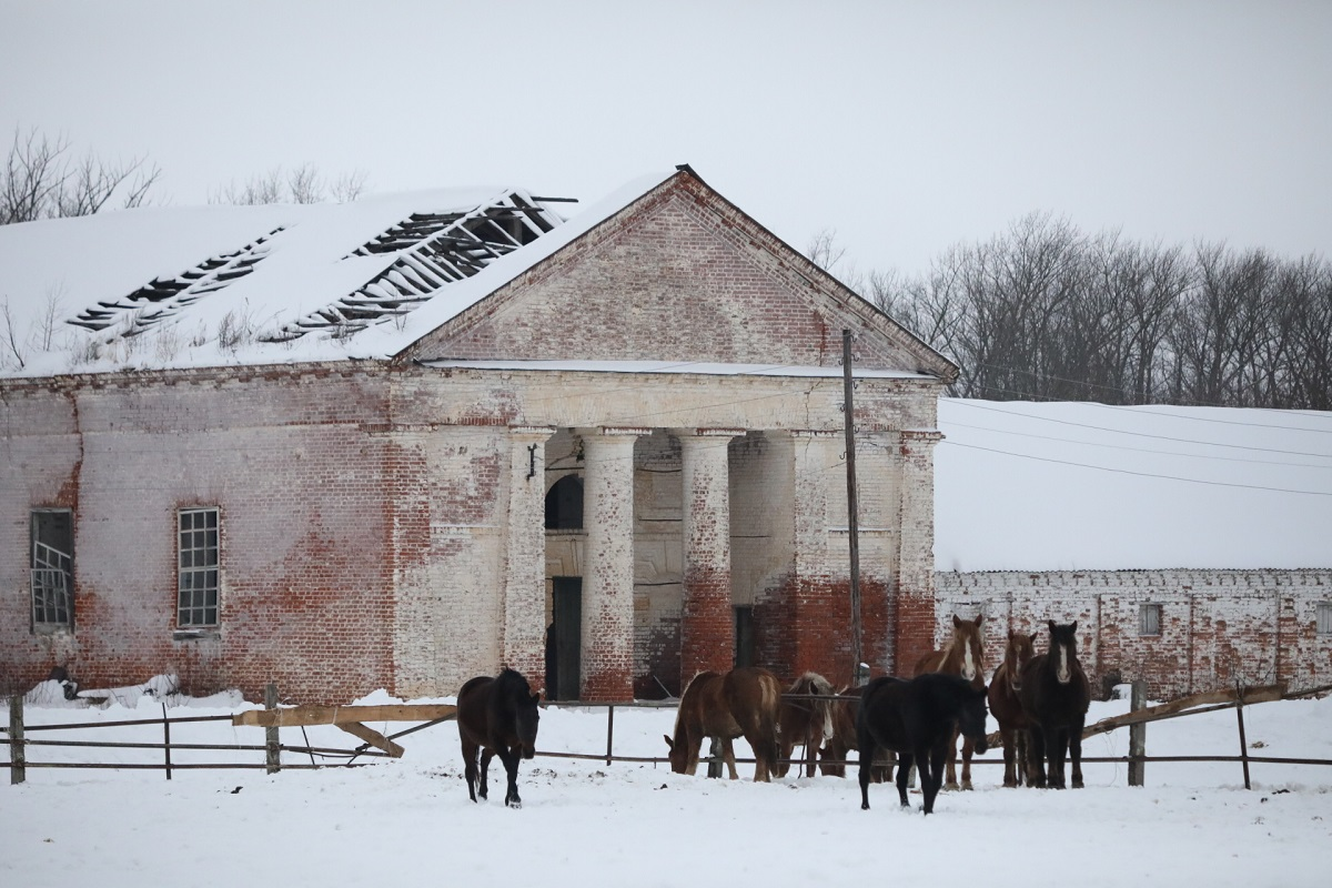 Починковский конный завод лошади