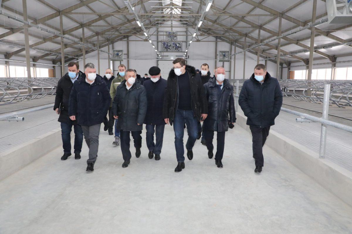 Новый молочный комплекс на племзаводе им. Ленина откроют в этом году
