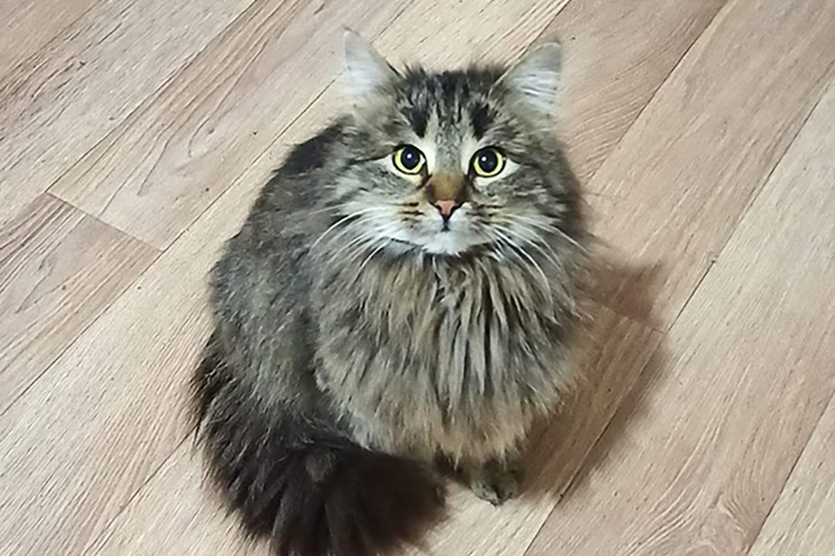 30 котов, живущих в квартире тяжелобольной нижегородки, нашли новых хозяев