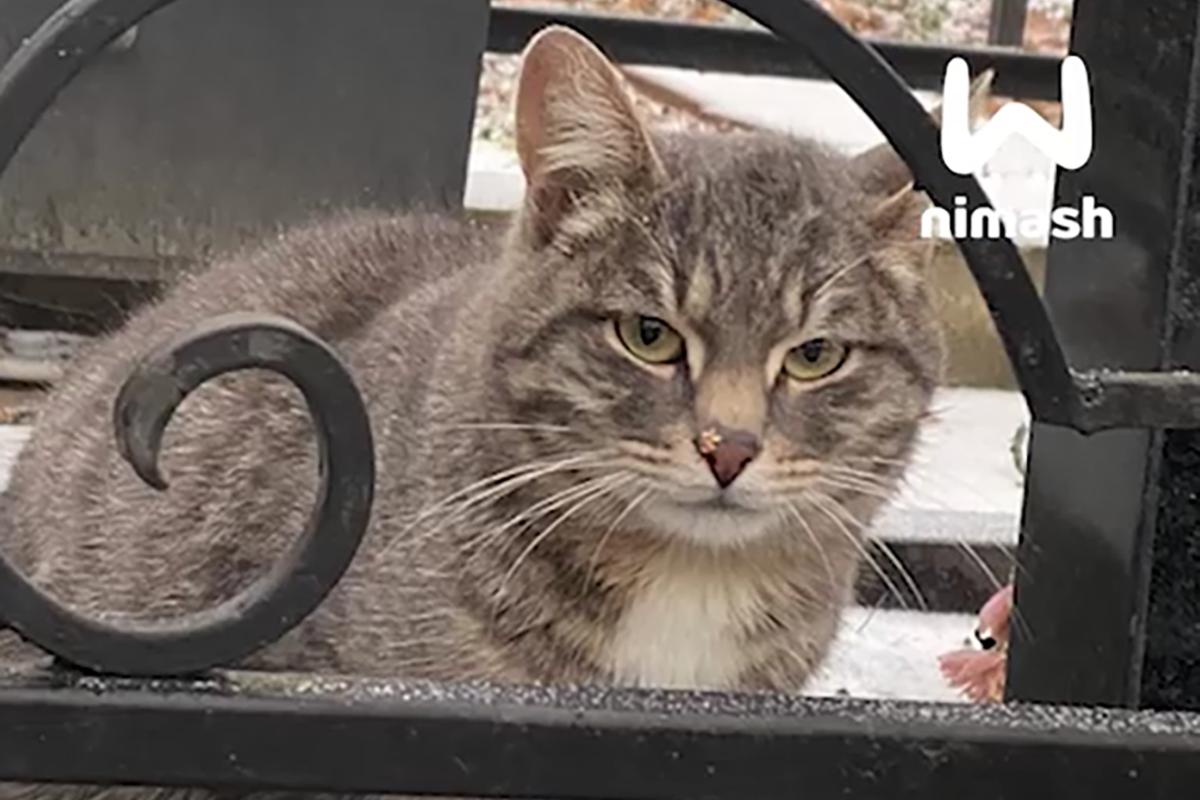 Нижегородка забрала кота, который полгода жил на могиле своего хозяина