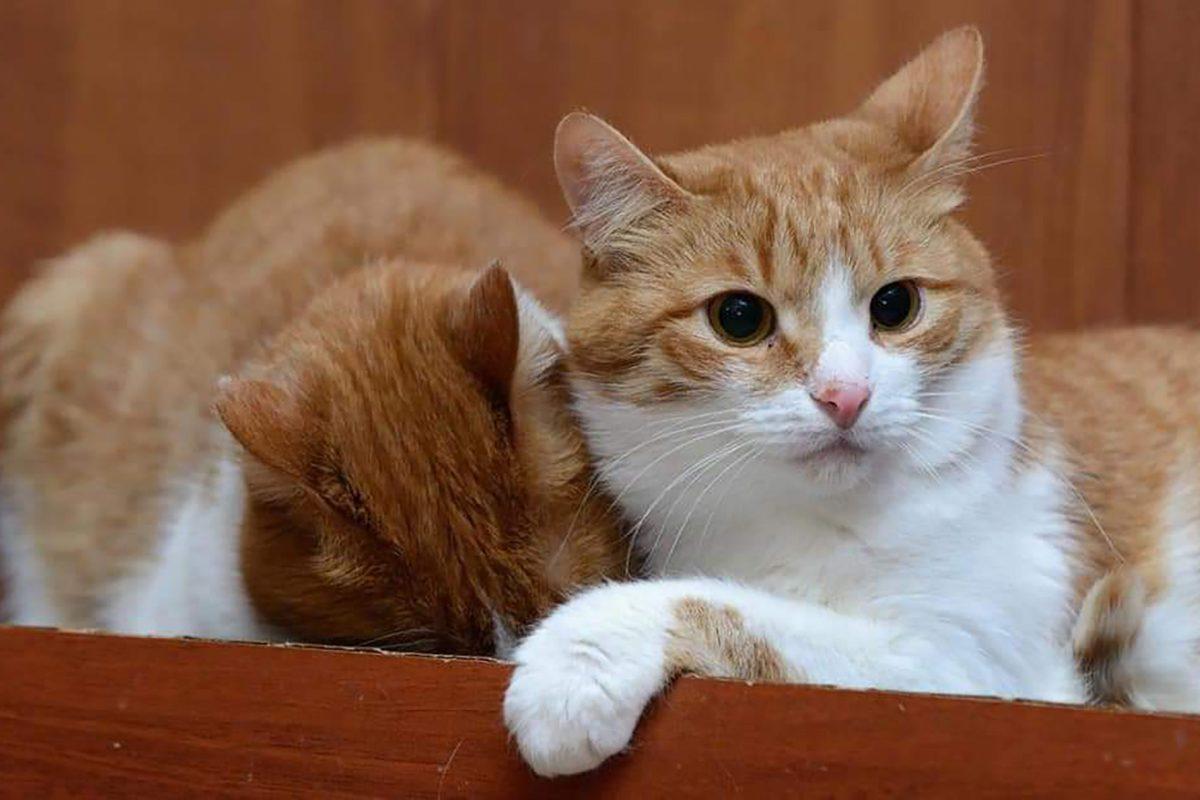 13 котов и 4 собаки остались у тяжелобольной нижегородки, которая ищет питомцам новый дом