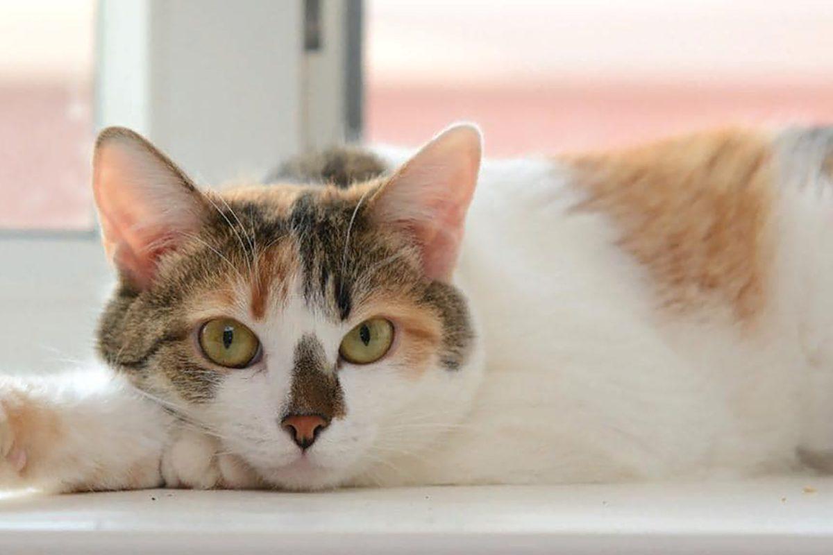 Тяжелобольная нижегородка ищет новый дом для 60 кошек и 7 собак