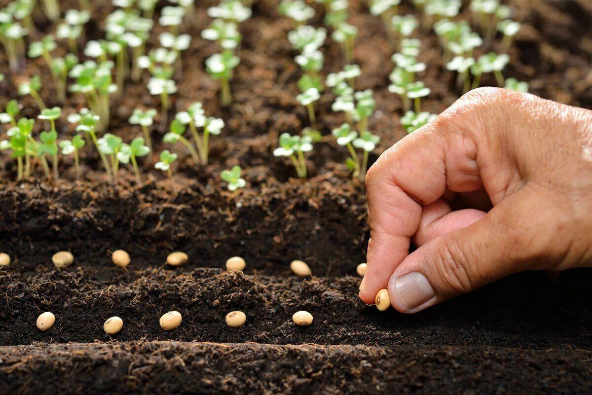 С чего начать новый огородный сезон: советы садовода из Заволжья