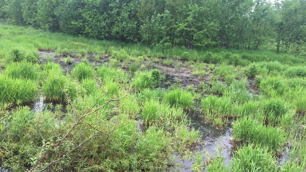 Больше 4 млн рублей обязали выплатить Семёновский «Горводоканал» за разлив сточных вод