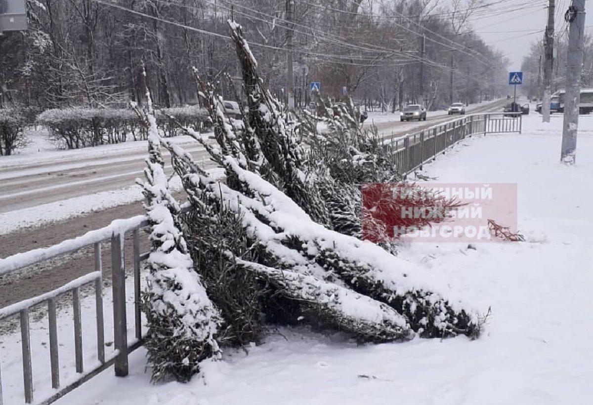 Свалка новогодних ёлок появилась на одной из улиц Нижнего Новгорода