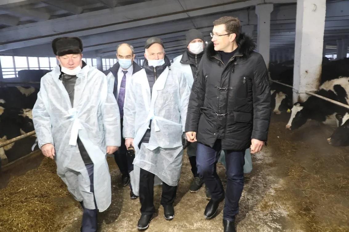 В2021 году объем поддержки животноводческих хозяйств вНижегородской области вырастет на8,5%