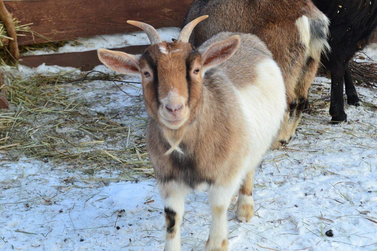 Зоопарк «Маленькая страна» из Балахны получил субсидию от правительства РФ