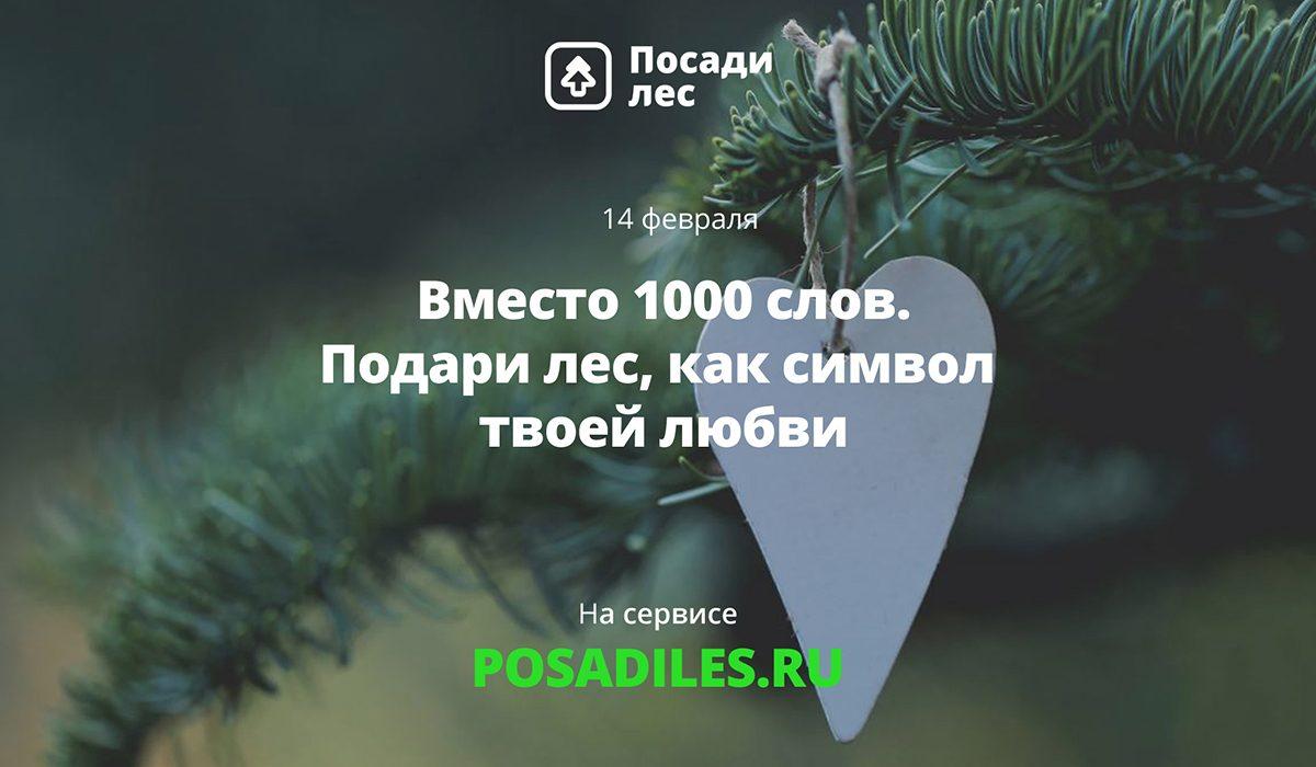 Укорени свою любовь: нижегородцы могут подарить именной лес своим вторым половинкам на 14 февраля