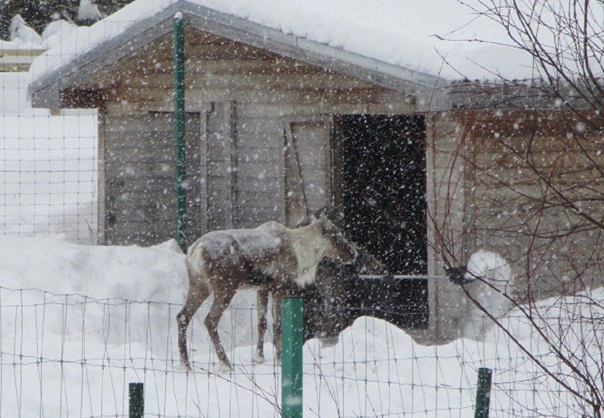 Фото дня: в Керженском заповеднике появился «единорог»