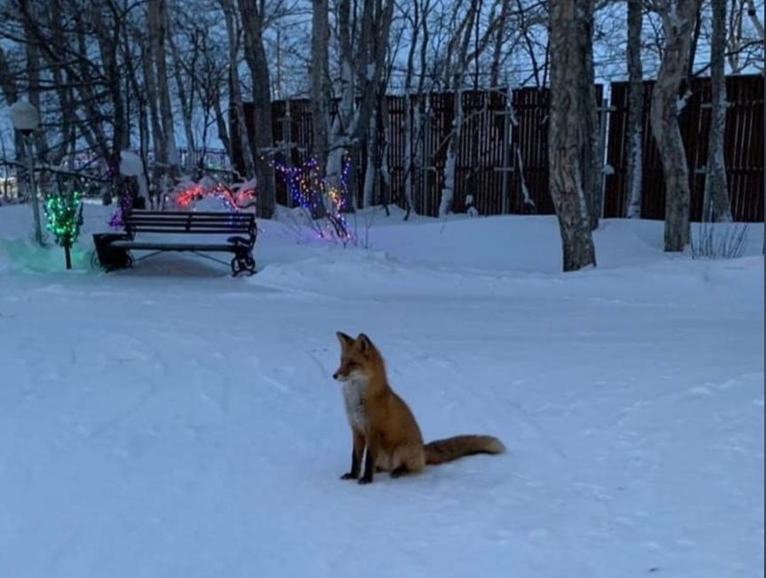 Фото дня: Лисичка позировала нижегородцам за вкусняшку в парке им. 1 Мая