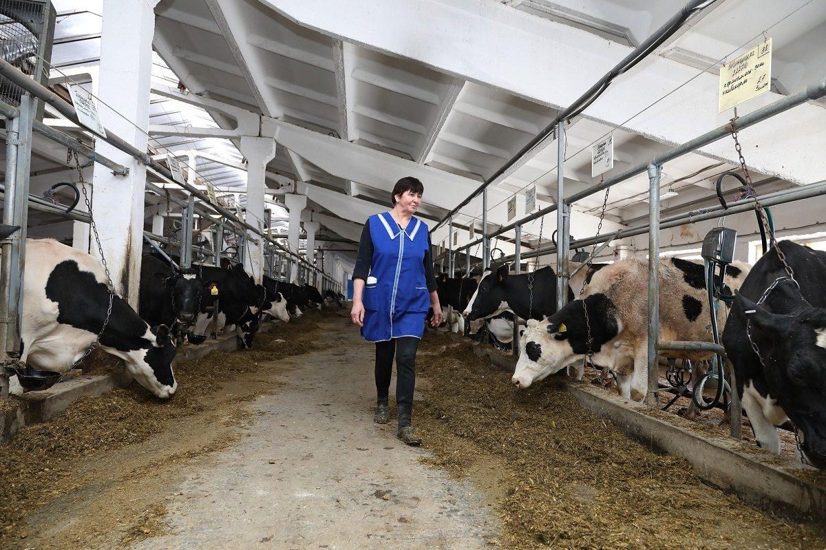 Новый роботизированный молочный комплекс откроется вБольшеболдинском районе