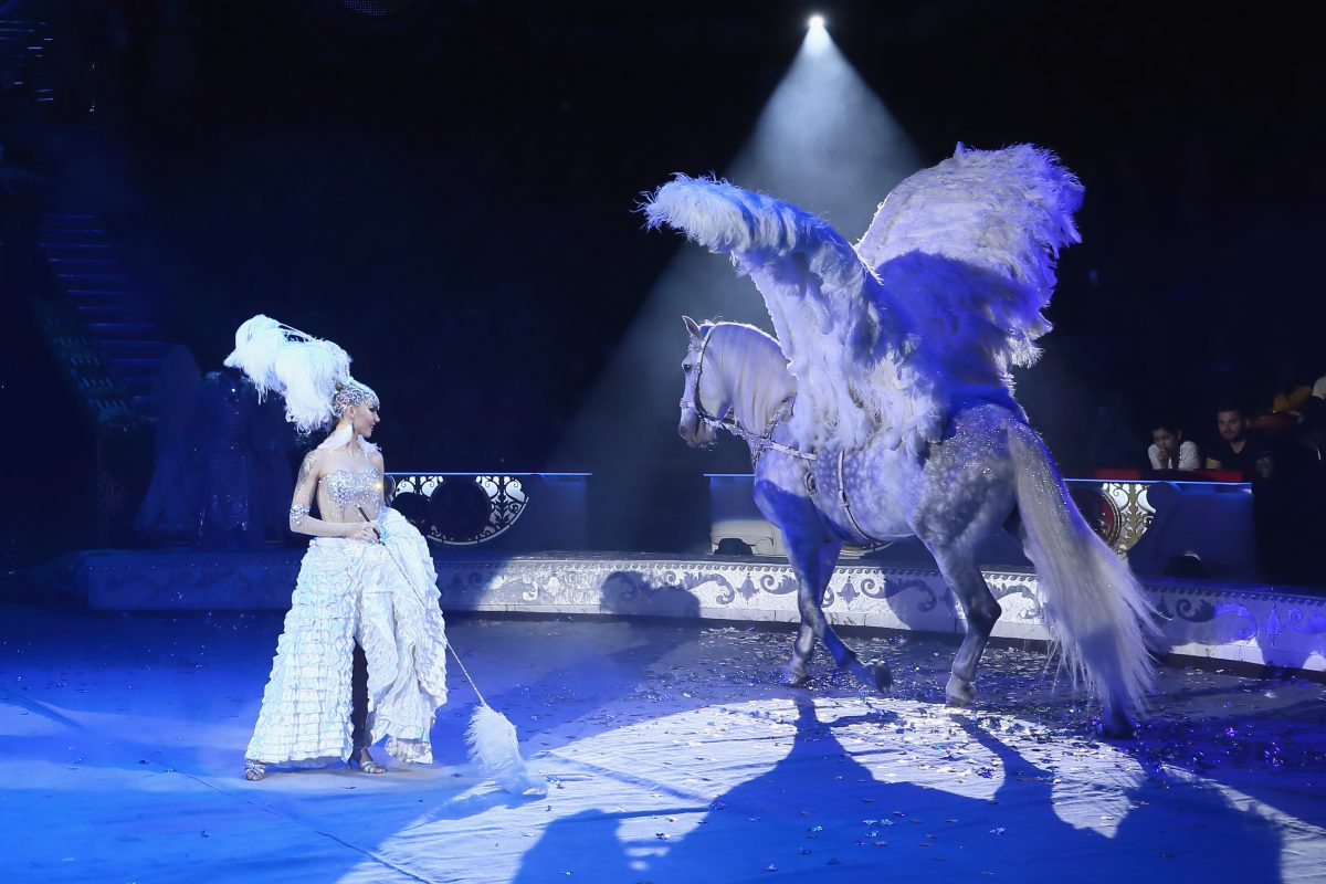 Нижегородский цирк открылся после долгого перерыва