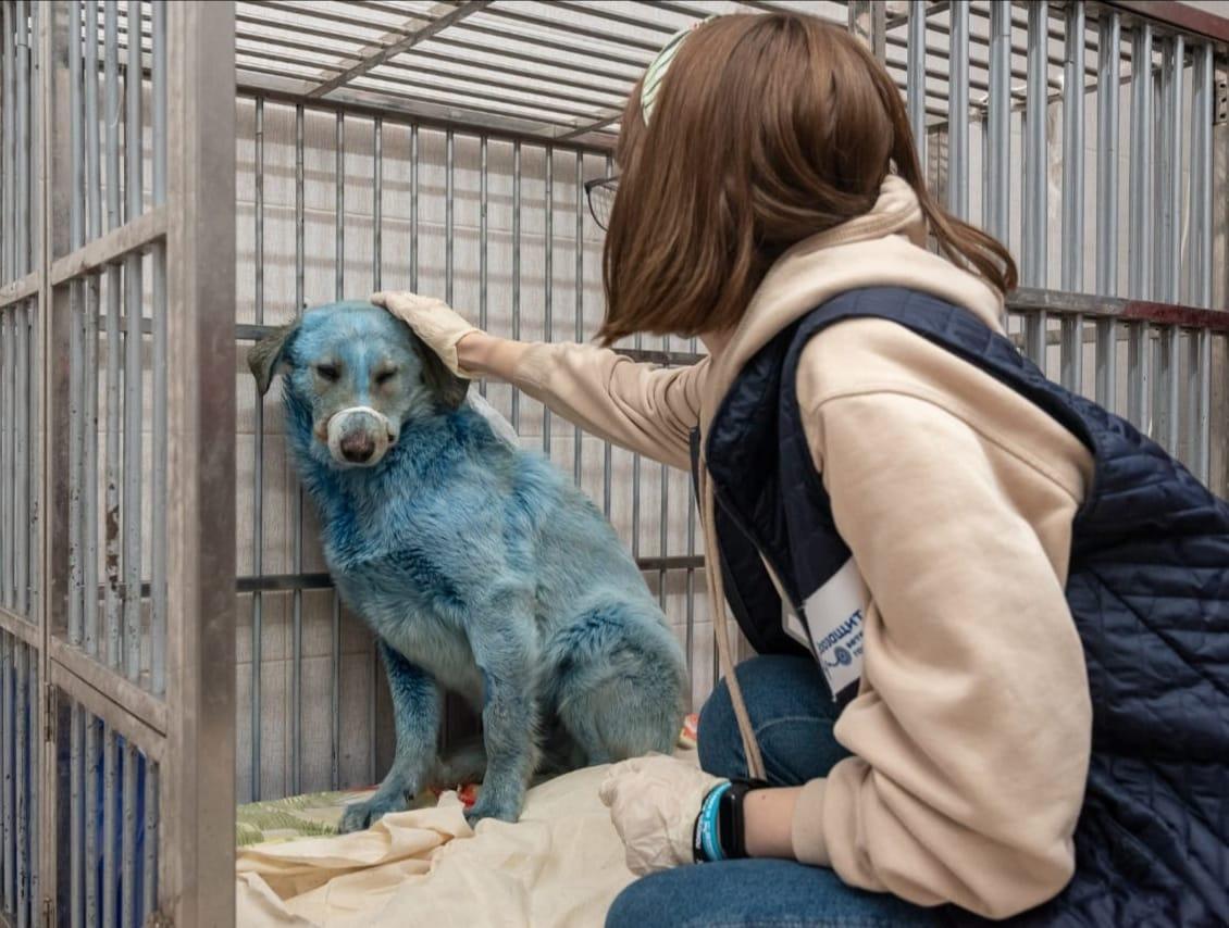 Краситель на шерсти синих собак в Дзержинске оказался безопасным