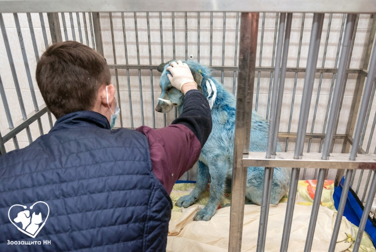 Синие собаки из Дзержинска находятся на карантине по бешенству: история этих животных дошла до зарубежных СМИ