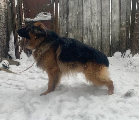 Четыре собаки, отслужившие в ГУФСИН, обрели новых хозяев в Нижегородской области