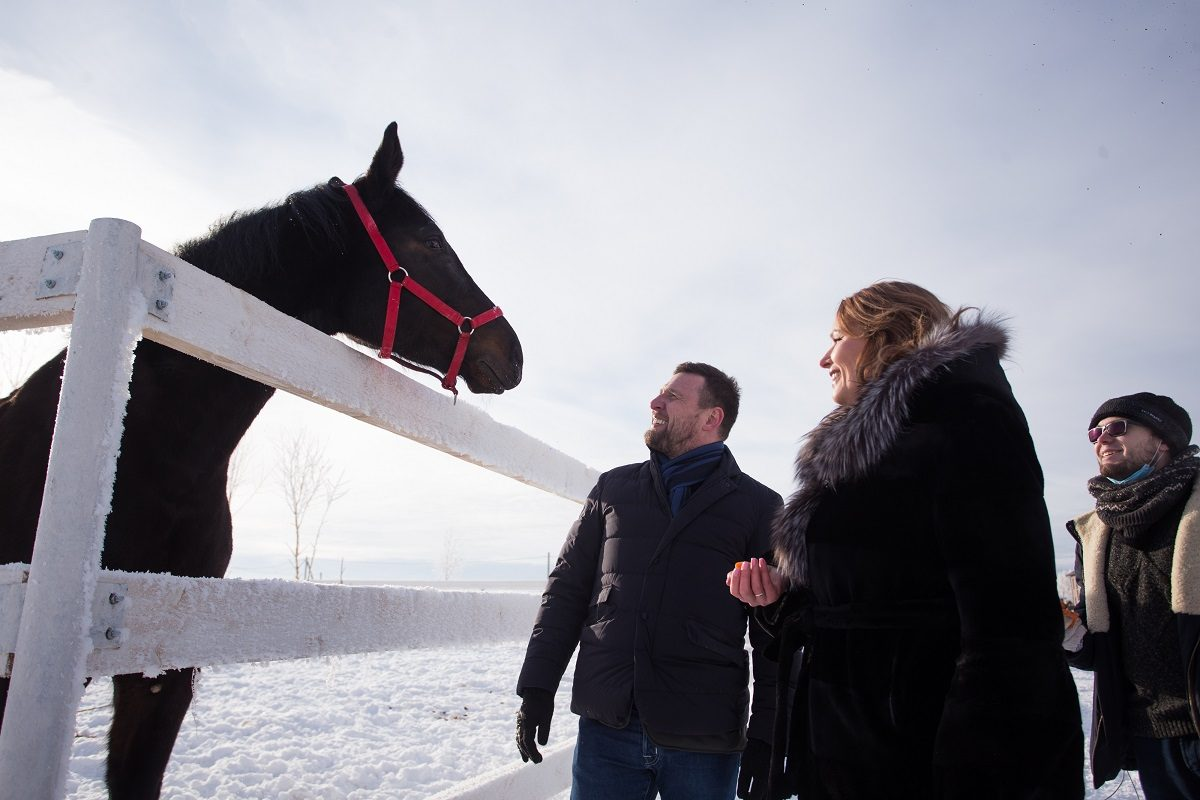 Приговоренные к смерти: как в первом в регионе Центре реабилитации спасают лошадей, привезенных с бойни