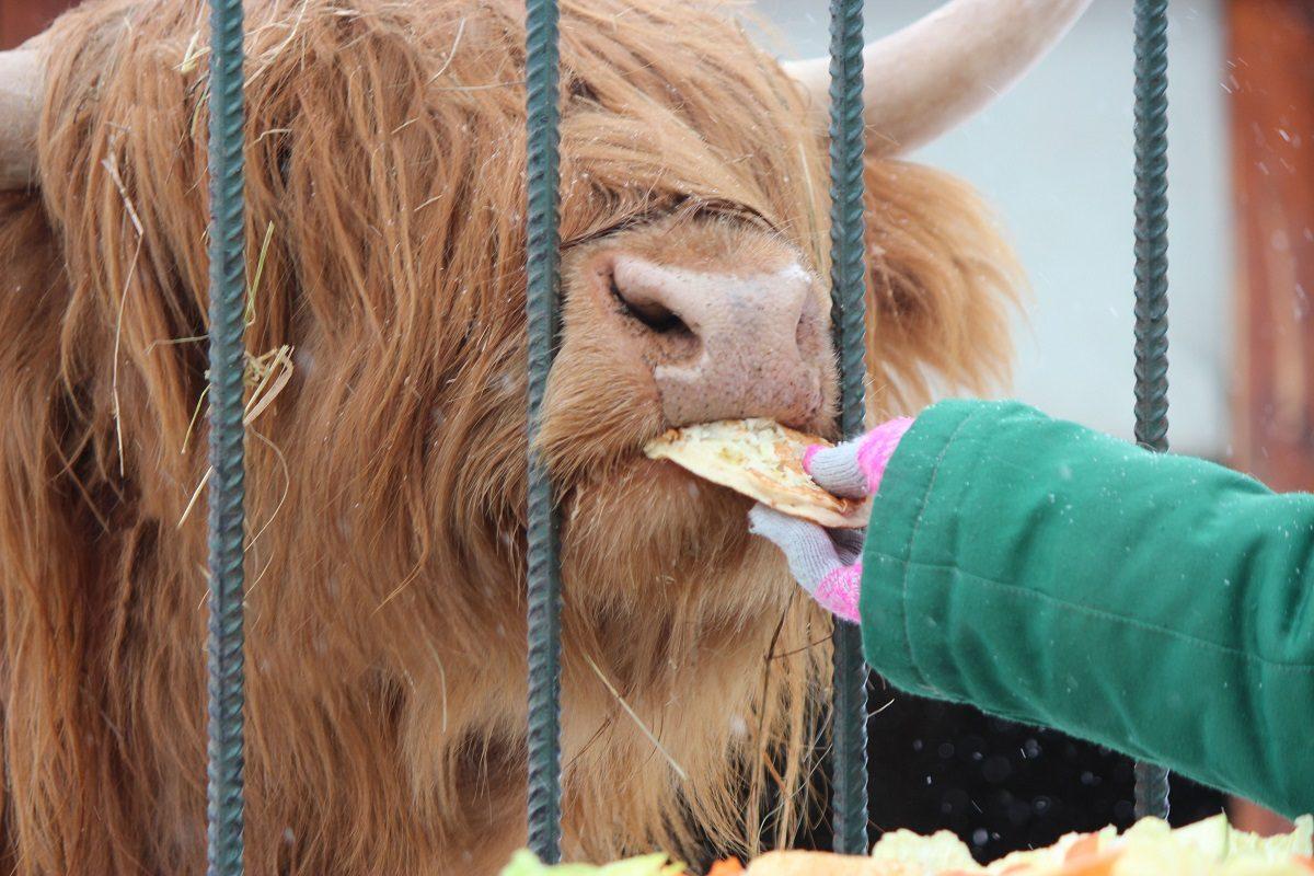 Зоопарк «Лимпопо» возобновил свою работу
