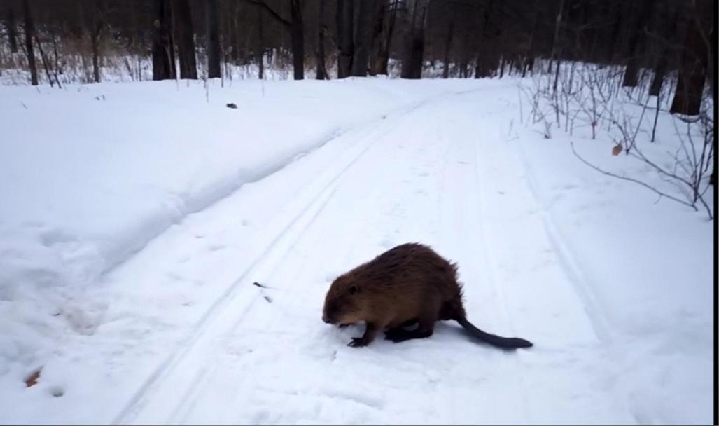 ВНижегородской области убобров закончилась зимовка