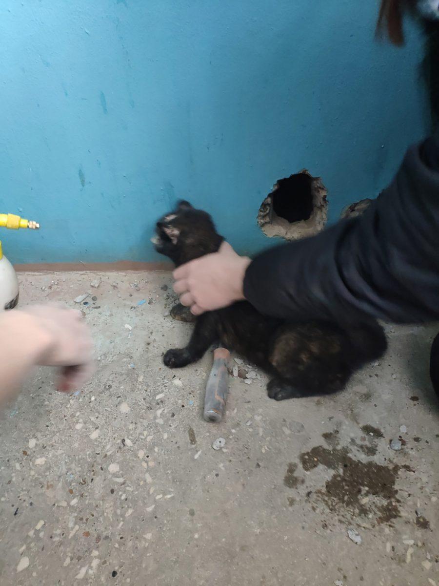 Нижегородец спас провалившуюся в вентиляционную шахту кошку