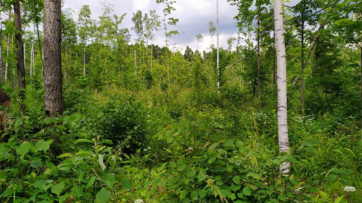 Предприниматель незаконно спилил более 2,5 тысяч деревьев в Уренском районе