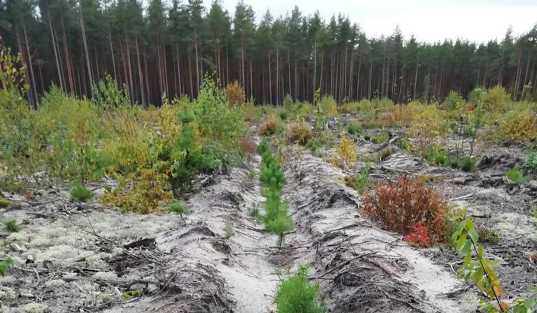 Объём лесовосстановления вНижегородской области в2021 году составит более 12 тысяч гектаров