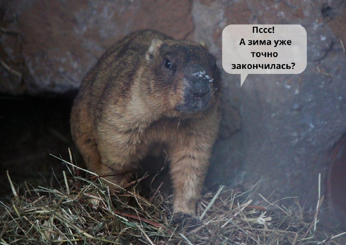 Сурки проснулись после зимней спячки в нижегородском зоопарке