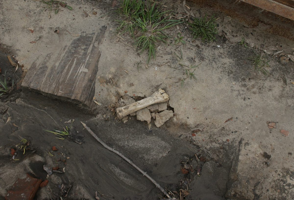 Странные фрагменты костей нашли под Нижегородским кремлём