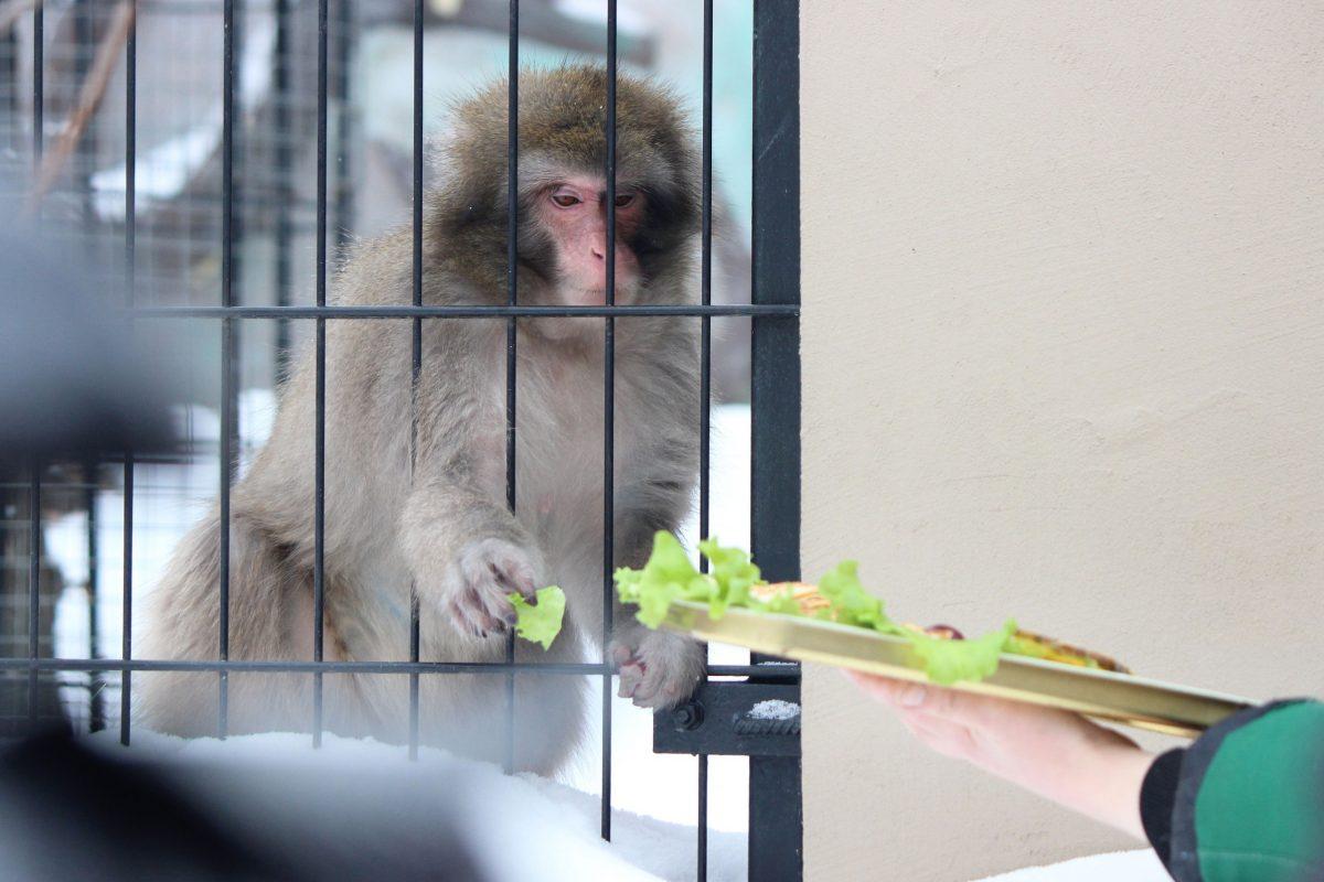 Макаки, тигры и ягуар: нижегородцы смогут увидеть, как кормят животных в зоопарке «Лимпопо»