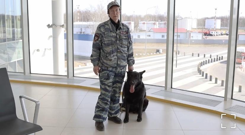Друг нижегородского корги-полицейского показал, как правильно дрессировать животных (ВИДЕО)