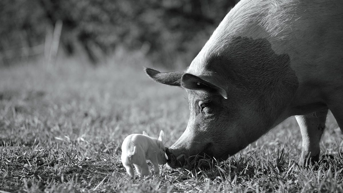 Маршрут выходного дня: от свиньи до Моцарта