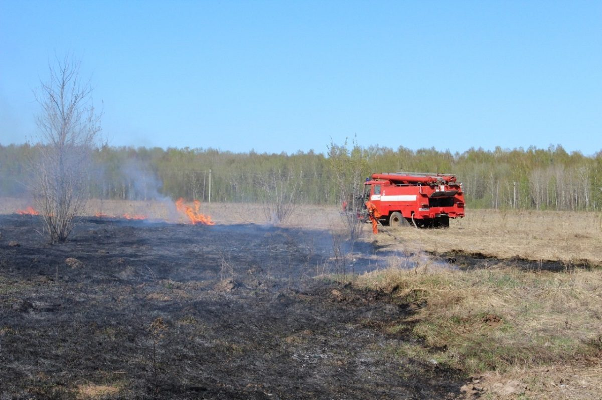 Минлесхоз: «Неконтролируемый пал травы— это экологическое преступление!»