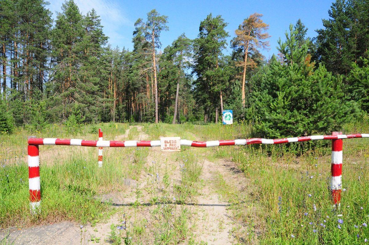 Нижегородец незаконно срубил шесть клёнов на 125 000 рублей