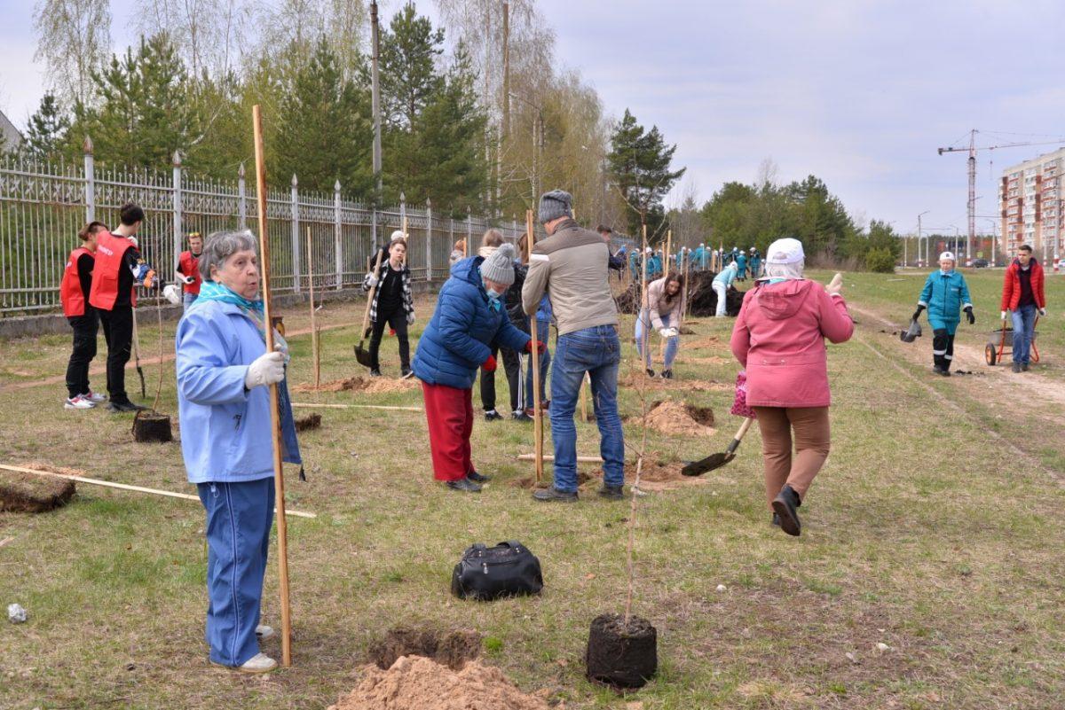 Первые 60 деревьев высажены в Дзержинске в рамках акции «Сад Памяти»
