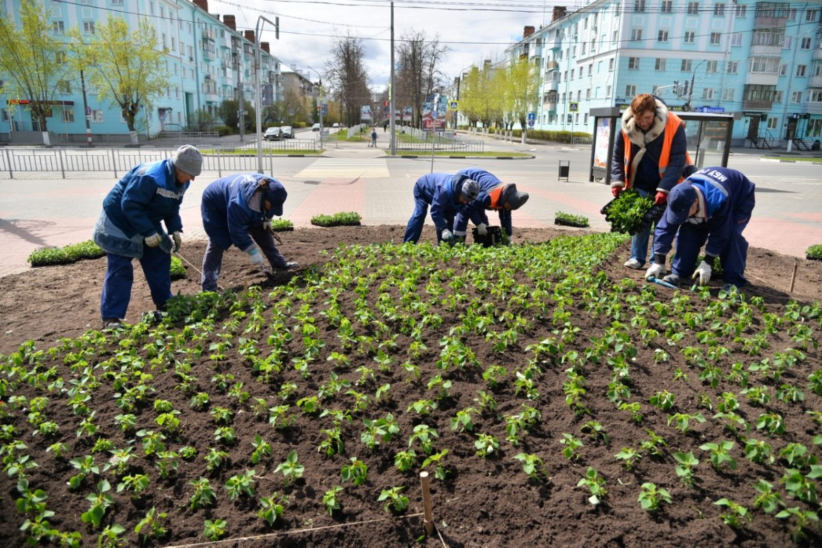 В Дзержинске начали высаживать цветы на городских клумбах