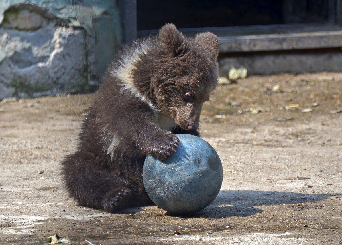 Медведи в Лимпопо