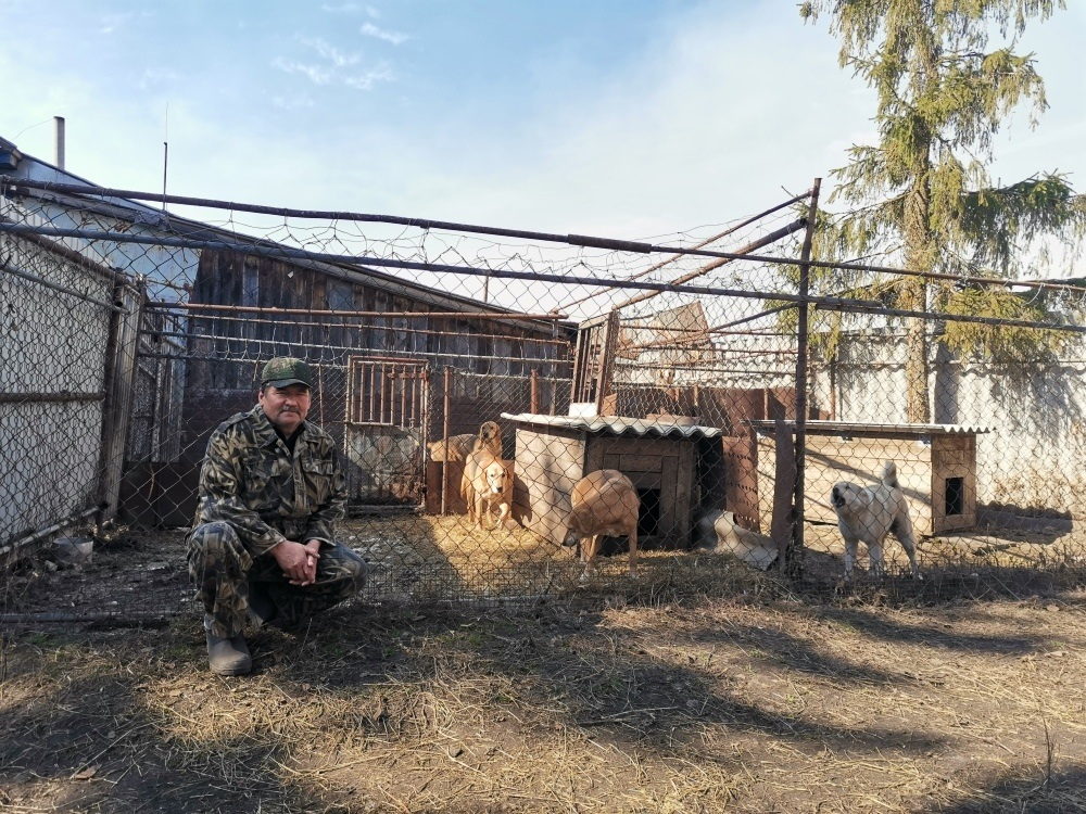 «Когда собаки гонят зверя, дрожь повсему телу»: охотник Степан Масягин рассказал о своем увлечении